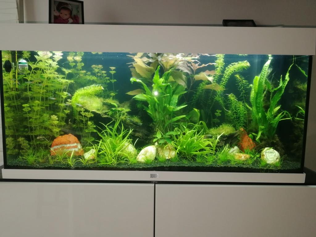 Nouvel aquarium et déjà quelques soucis  Img_2031