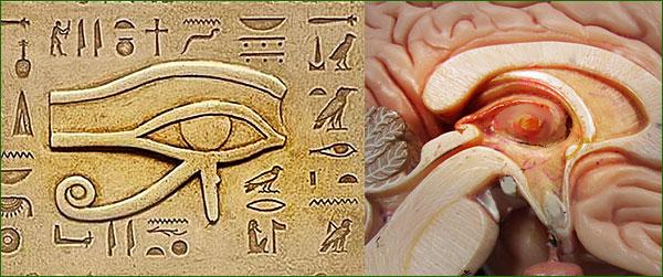 Oeil d'horus ... mémoires cell Oeil-h10