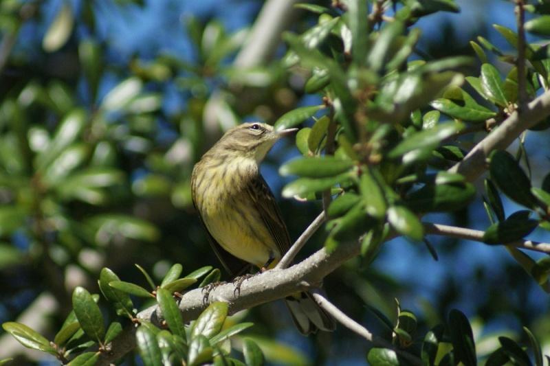 5 Oiseaux de Floride Orland17