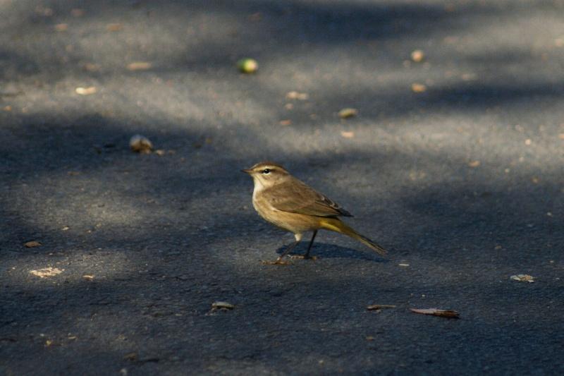 5 Oiseaux de Floride Orland18