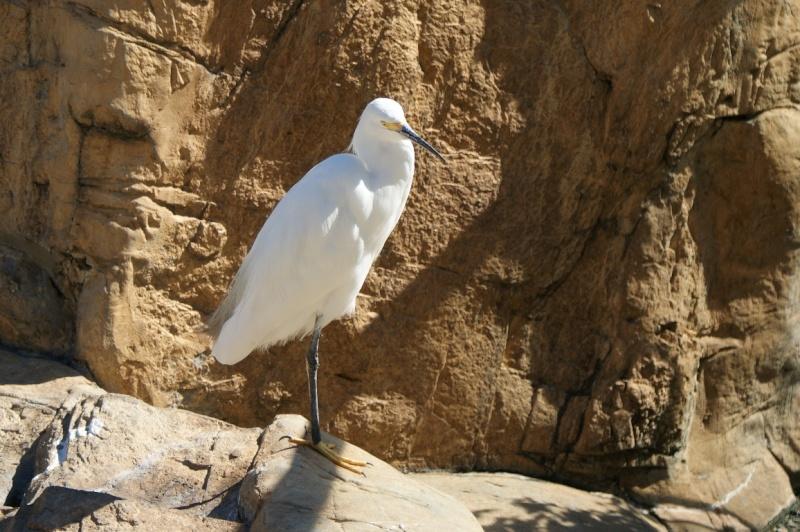 5 Oiseaux de Floride Orland21