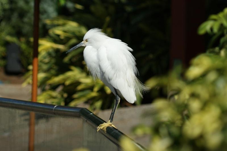 5 Oiseaux de Floride Orland22