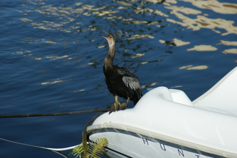 Oiseaux de Floride -2 Orland28