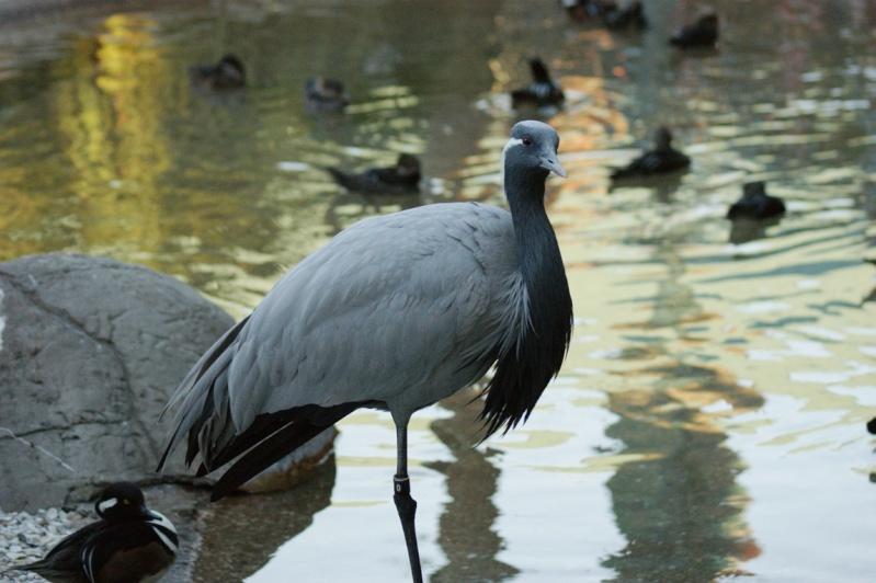 Oiseaux de Floride -2 Orland29