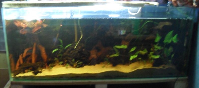 400 litres pour fluviatiles amazoniens 011-ba10
