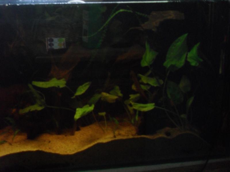400 litres pour fluviatiles amazoniens 012-ba10