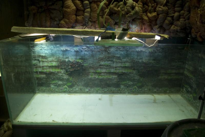 400 litres pour fluviatiles amazoniens Bac_pl11