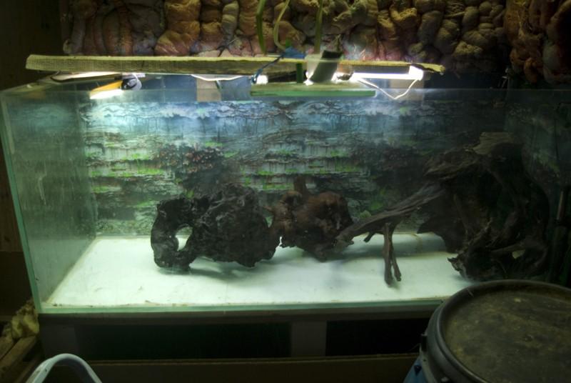 400 litres pour fluviatiles amazoniens Bac_pl13