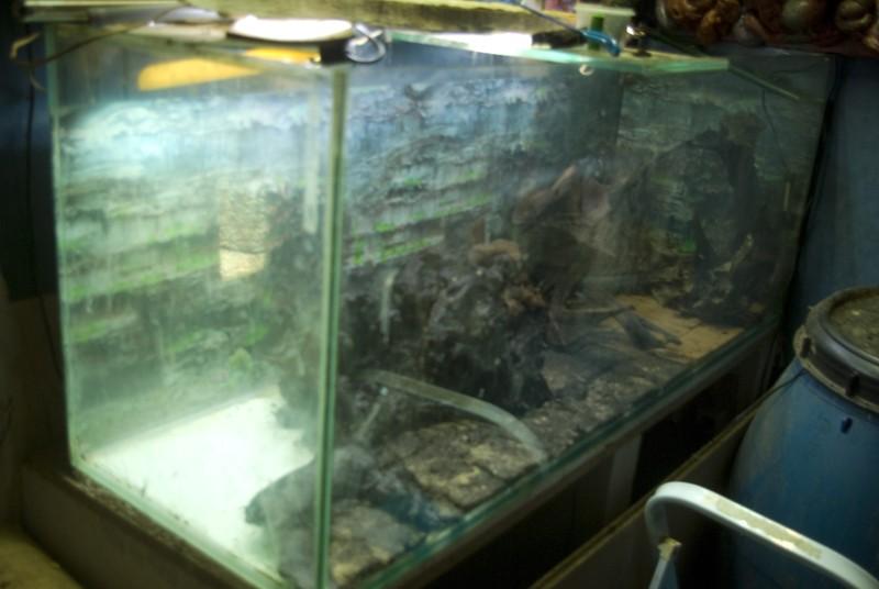 400 litres pour fluviatiles amazoniens Bac_pl15