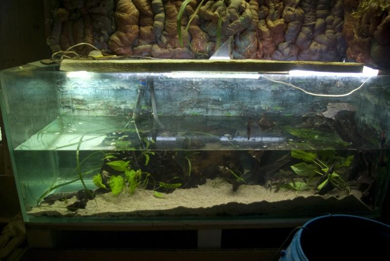 400 litres pour fluviatiles amazoniens Bac_pl17
