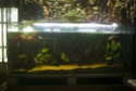 400 litres pour fluviatiles amazoniens 009-ba11