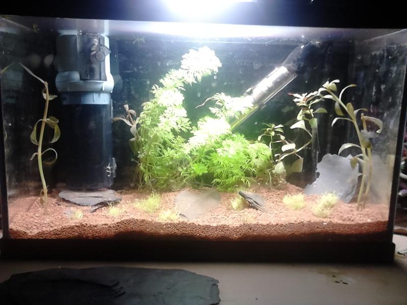 nano 20 litres aquascaping Dsc_0013