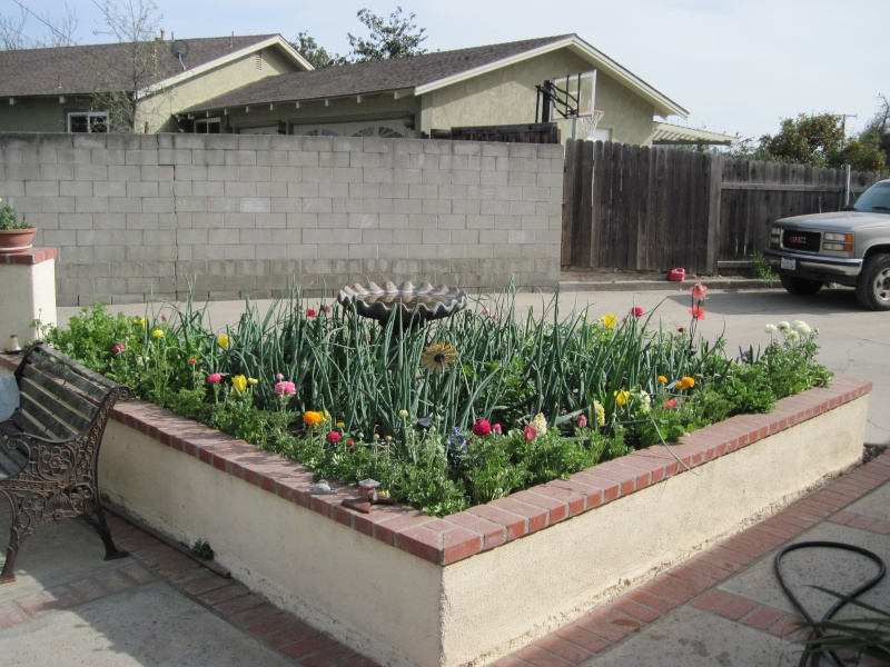 My spring garden has sprung!! Img_0211