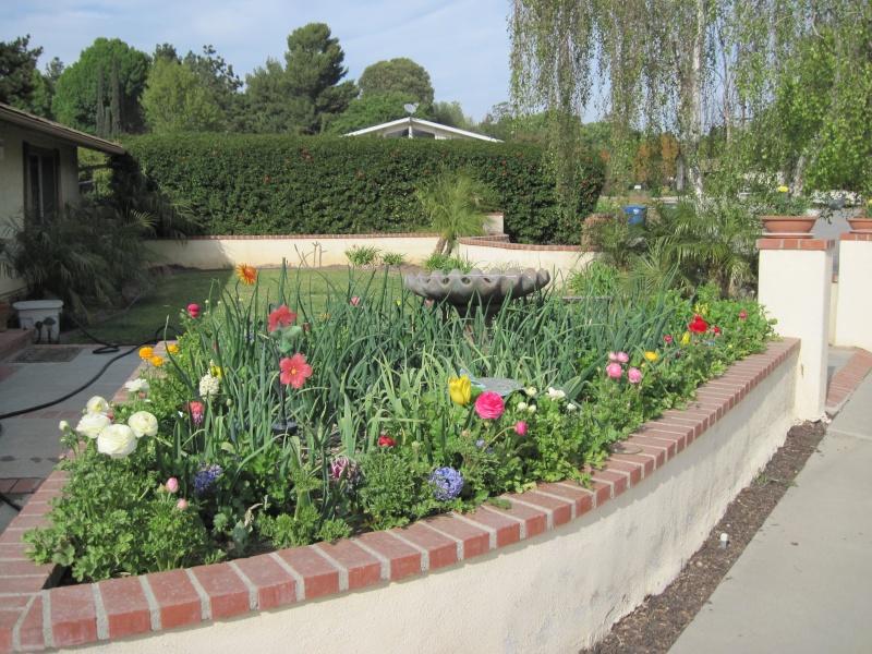My spring garden has sprung!! Img_0212
