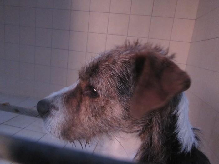 BILL le chien 03810
