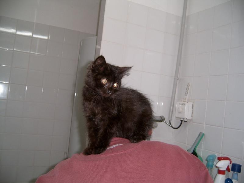 encore un chaton-Mitsy Suc30029