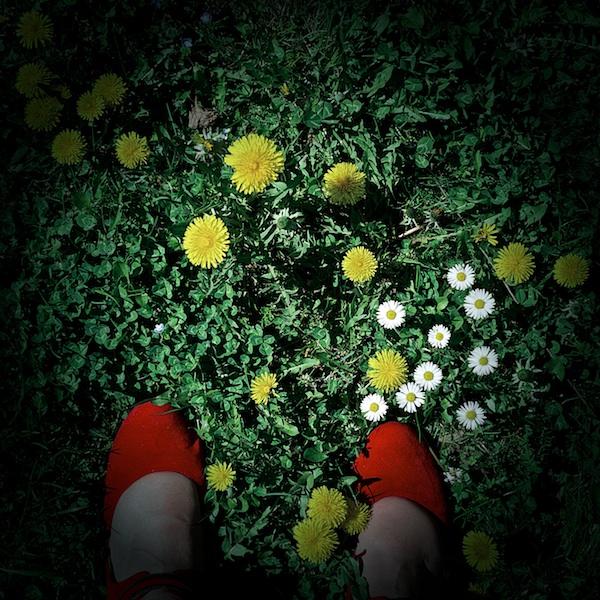 Avoir les pieds sur terre... + 1 le 19- 07 -13 - Page 4 _1090111