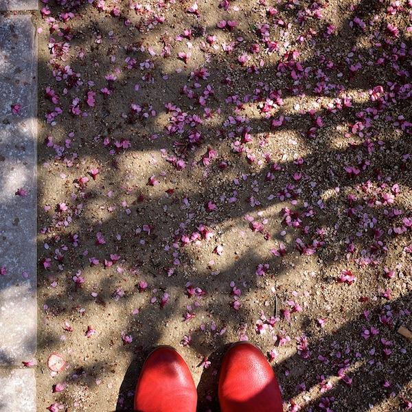 Avoir les pieds sur terre... + 1 le 19- 07 -13 - Page 4 P1090011