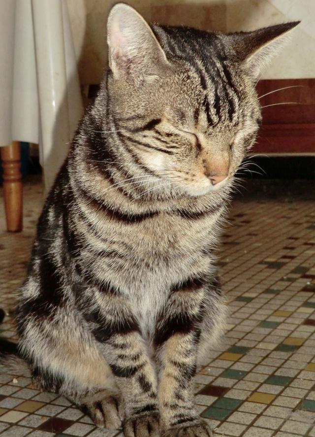 Chipie - Tigrée noire - née en 2008 en FA - Page 3 Cimg9610