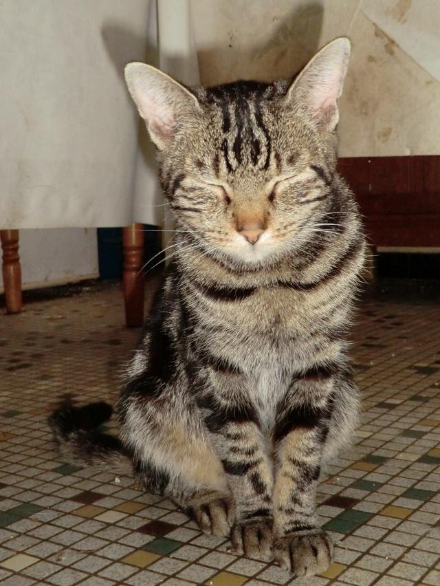 Chipie - Tigrée noire - née en 2008 en FA - Page 3 Cimg9611