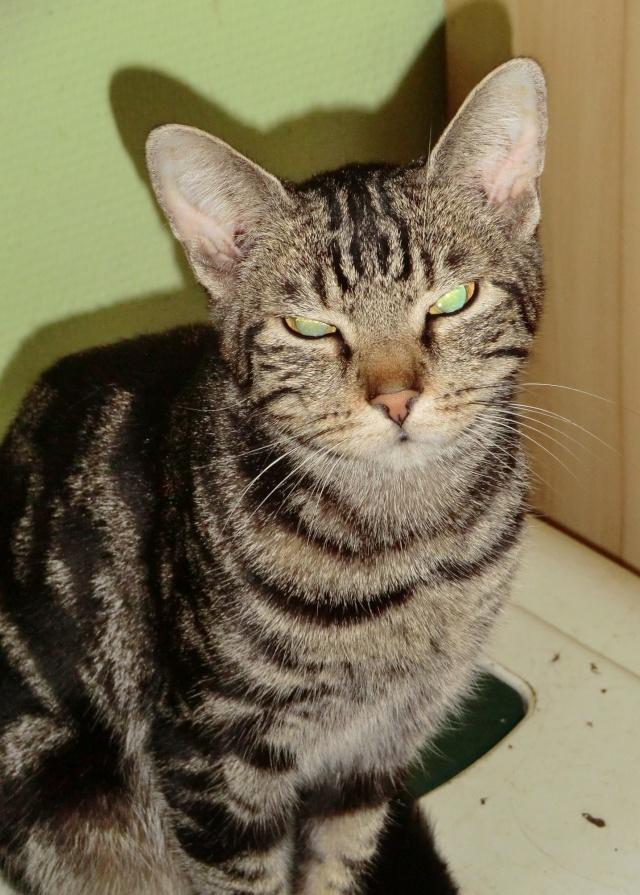 Chipie - Tigrée noire - née en 2008 en FA - Page 3 Cimg9612