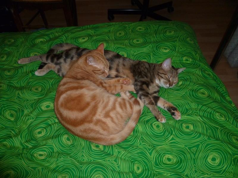Helfy et Cooki(e?) P1090110