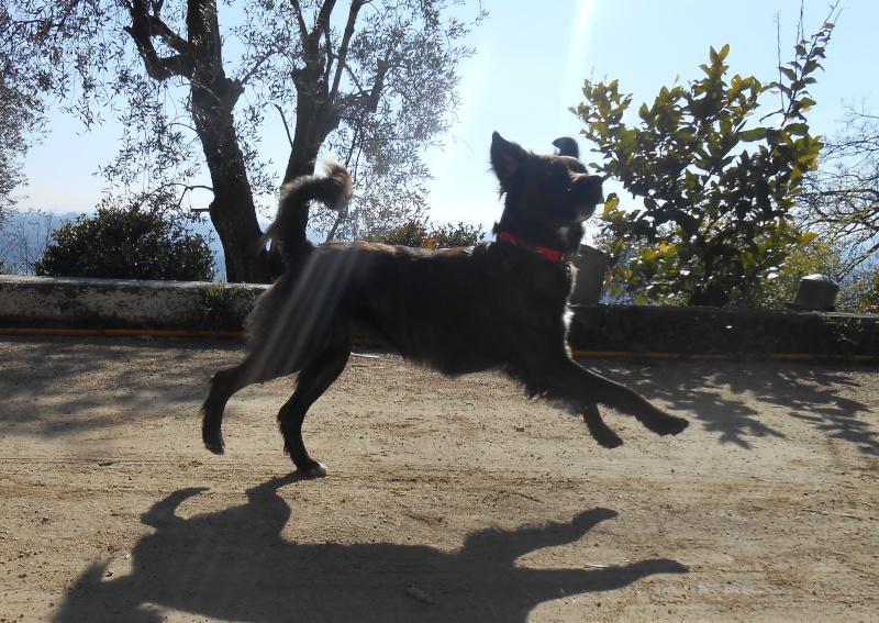 bagarre - Bagarre de chiens au parc. oulala je suis énervée ... - Page 4 04510