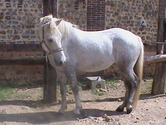 Cherche cheval de loisirs Dsc01910