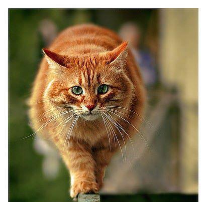 Pour les amoureux des chats... 57954010