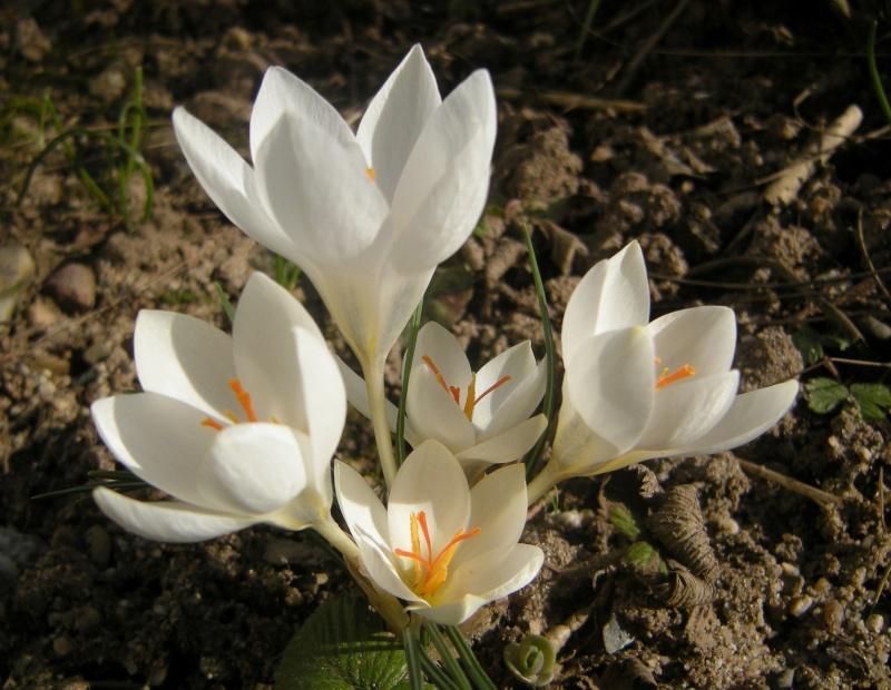 Erste Frühlingsboten im Garten und in Wald und Flur - Seite 3 Dscn9220