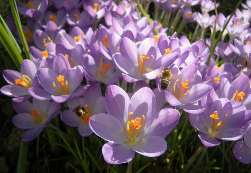 Erste Frühlingsboten im Garten und in Wald und Flur - Seite 3 Dscn9221