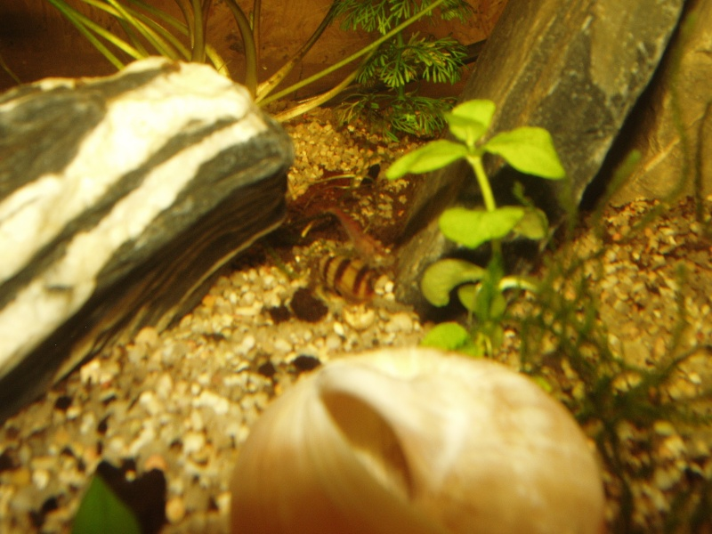 Ma petite fishroom - Page 3 P1010012