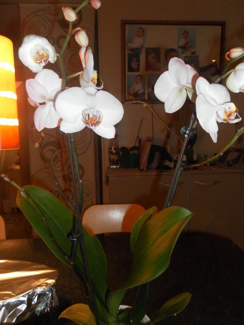 les orchidées de syljou - Page 2 Sam_8438