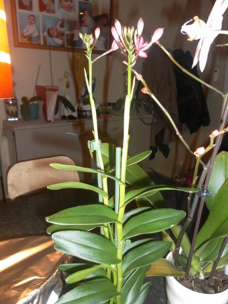 les orchidées de syljou - Page 2 Sam_8441