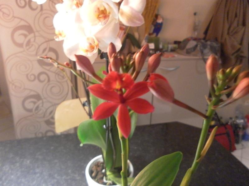 les orchidées de syljou - Page 2 Sam_8443