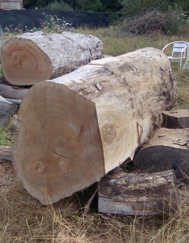 Débit d'un tronc de platane à la tronçonneuse 01tron10
