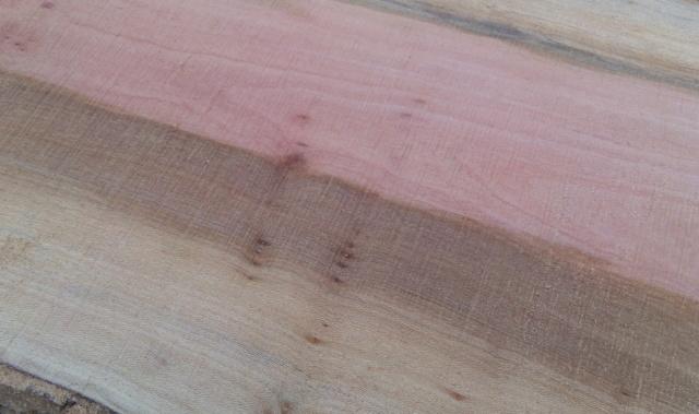 Débit d'un tronc de platane à la tronçonneuse 06bois10