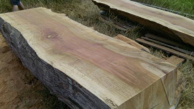 Débit d'un tronc de platane à la tronçonneuse 08bois10