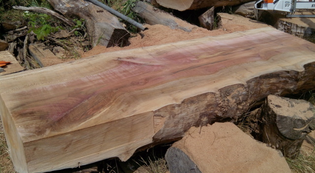 Débit d'un tronc de platane à la tronçonneuse 09bois11