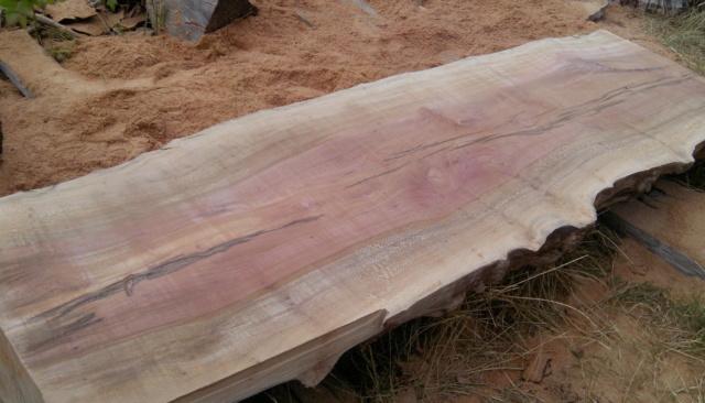 Débit d'un tronc de platane à la tronçonneuse 10bois11