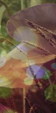 Atelier de Givre (je suis de retour... enfin :] ) [0/1] Avatar17