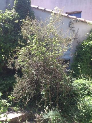 (34) Pépinière Issa - Valflaunès (2 semaines de stage) Colis_22