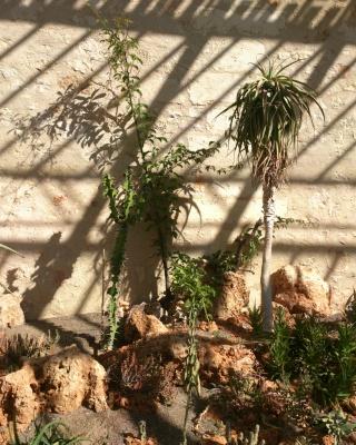 (34) La serre Martins - Jardin des plantes de Montpellier - Page 2 Serre101