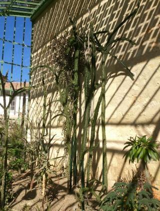 (34) La serre Martins - Jardin des plantes de Montpellier - Page 2 Serre114