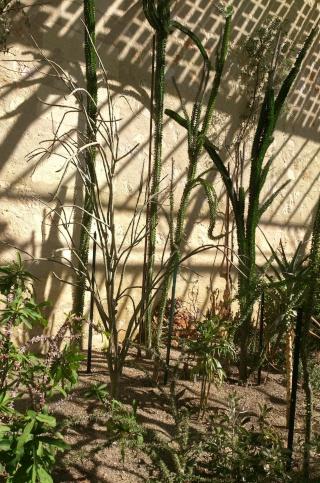 (34) La serre Martins - Jardin des plantes de Montpellier - Page 2 Serre117