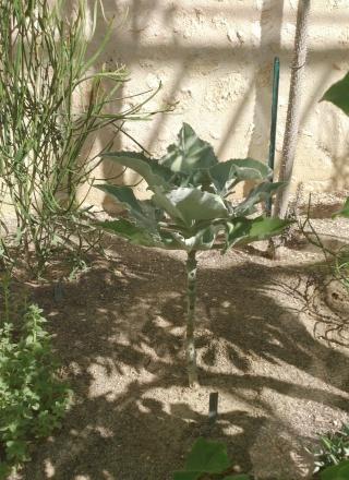 (34) La serre Martins - Jardin des plantes de Montpellier - Page 2 Serre123