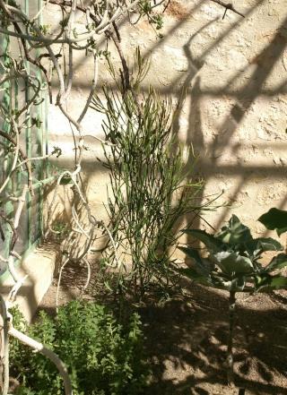 (34) La serre Martins - Jardin des plantes de Montpellier - Page 2 Serre124