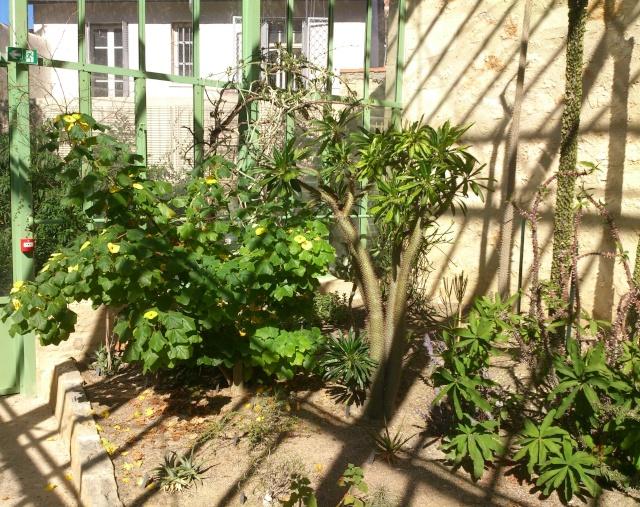 (34) La serre Martins - Jardin des plantes de Montpellier - Page 2 Serre127