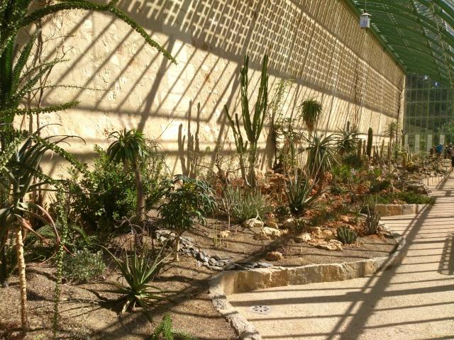 (34) La serre Martins - Jardin des plantes de Montpellier - Page 2 Serre128