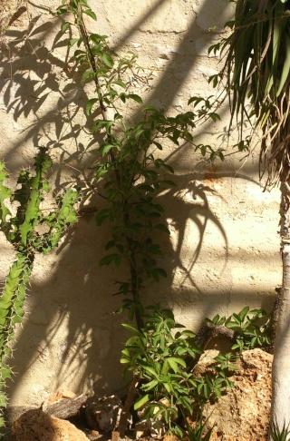 (34) La serre Martins - Jardin des plantes de Montpellier - Page 2 Serre130
